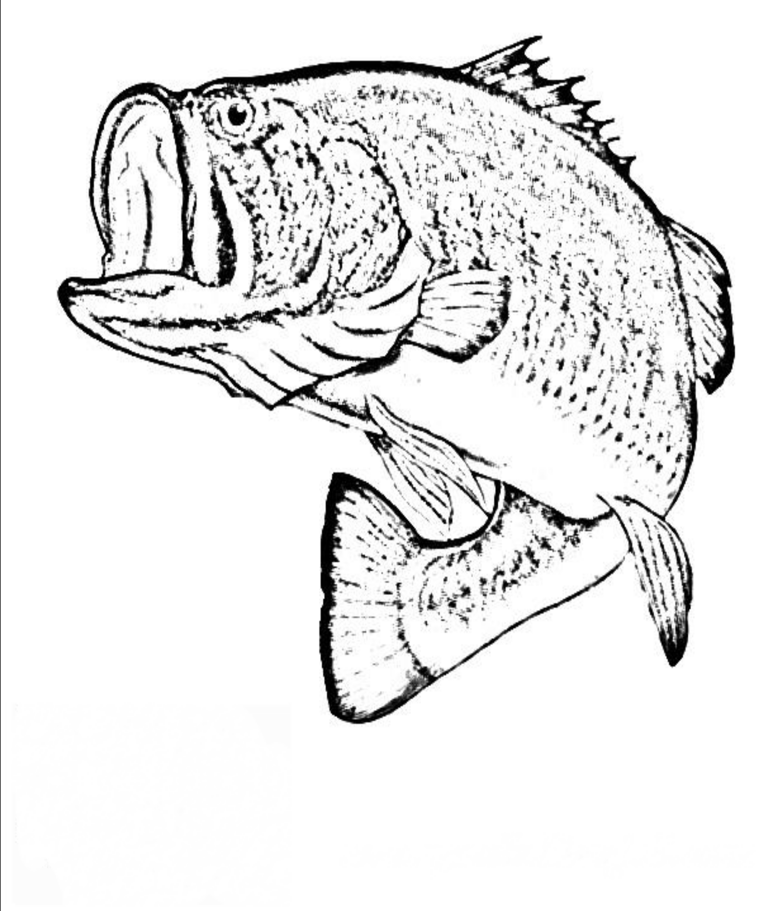 detailed fish coloring pages coloring pages for adults koi carp wealth symbol adult coloring fish detailed pages