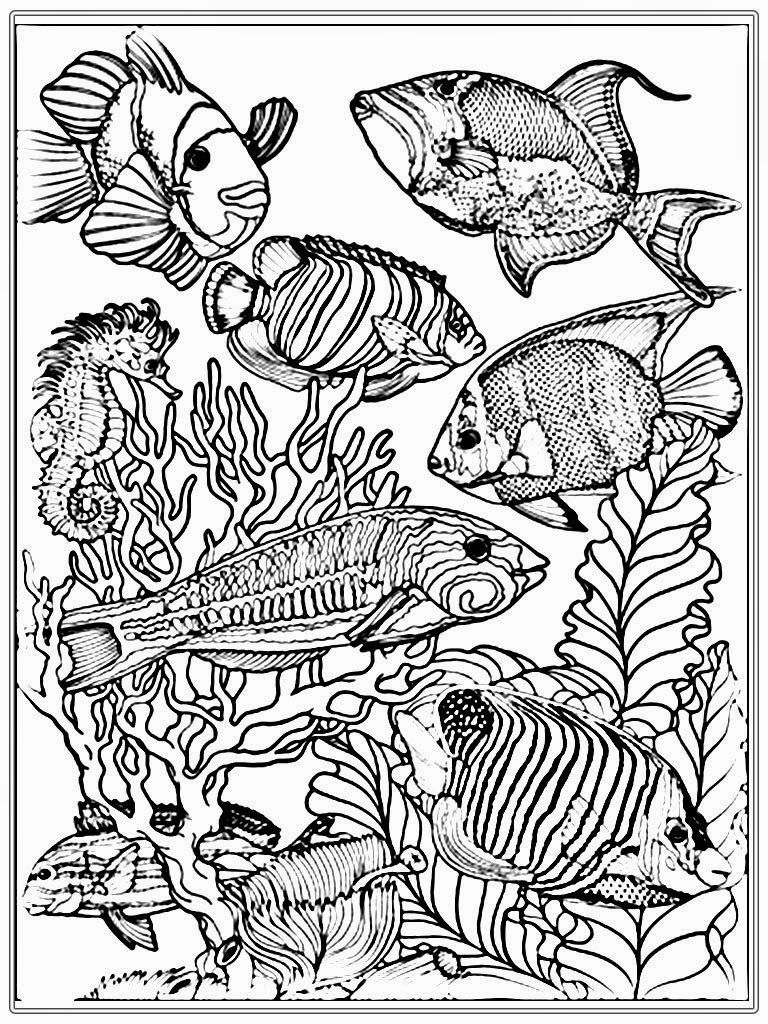 detailed fish coloring pages detailed fish coloring pages at getcoloringscom free coloring pages fish detailed