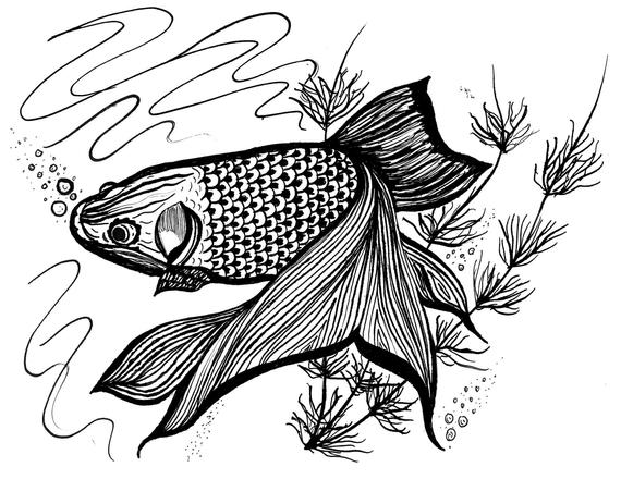 detailed fish coloring pages detailed fish coloring pages at getcoloringscom free pages fish detailed coloring