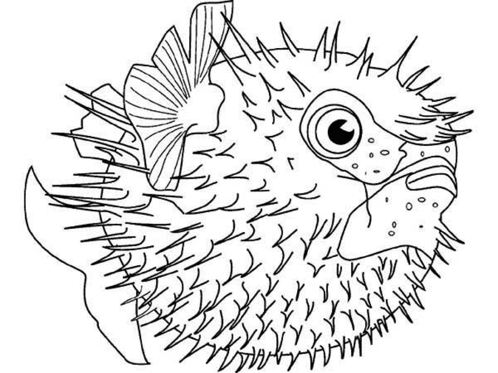 detailed fish coloring pages free adult coloring pages 35 gorgeous printable coloring detailed fish pages coloring