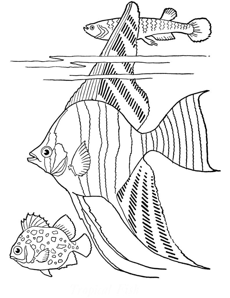 detailed fish coloring pages image result for underwater kingdom coloring detailed fish coloring pages detailed