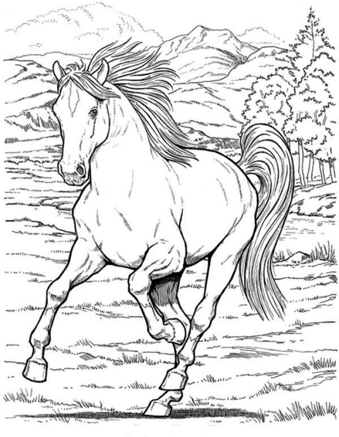 detailed horse coloring pages 481 best coloring pages horse adult coloring images on horse pages detailed coloring