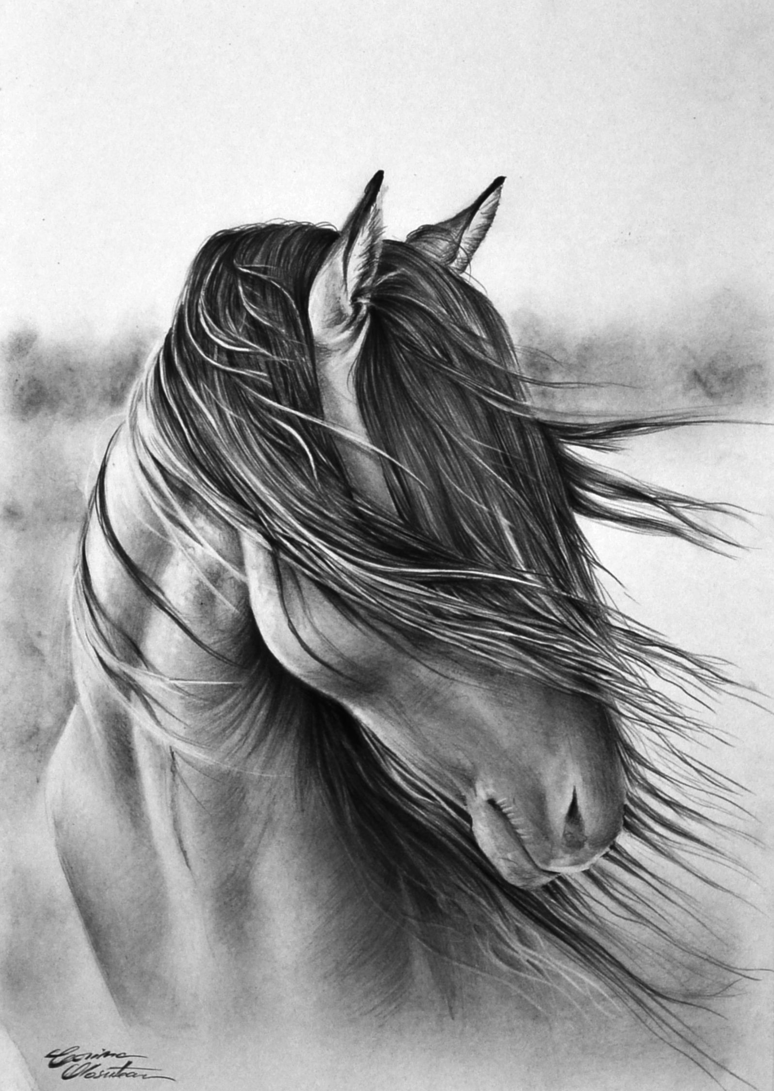 detailed horse coloring pages coloring pages of horses printable free coloring sheets detailed coloring pages horse