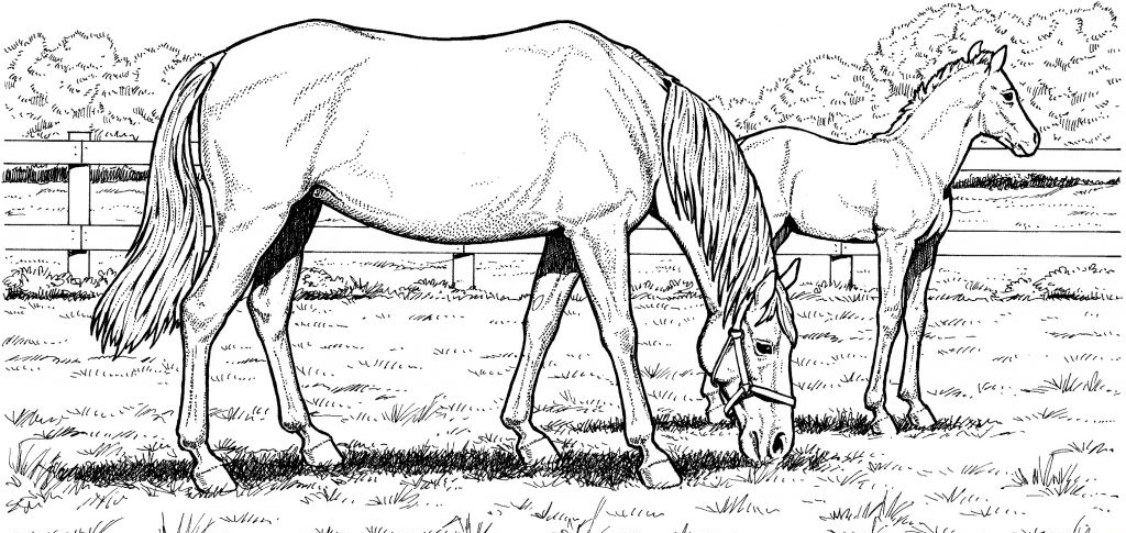 detailed horse coloring pages detailed horse coloring pages for adults coloring pages pages detailed horse coloring