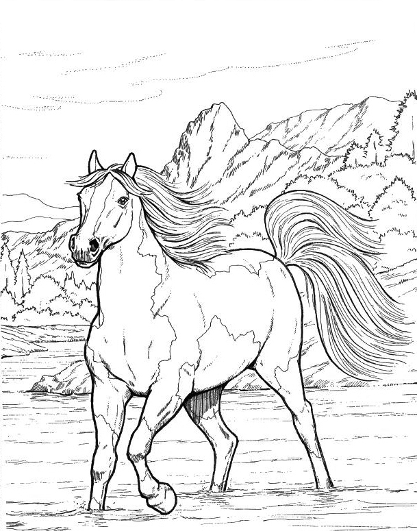 detailed horse coloring pages horse coloring pages for adults best coloring pages for kids horse coloring pages detailed
