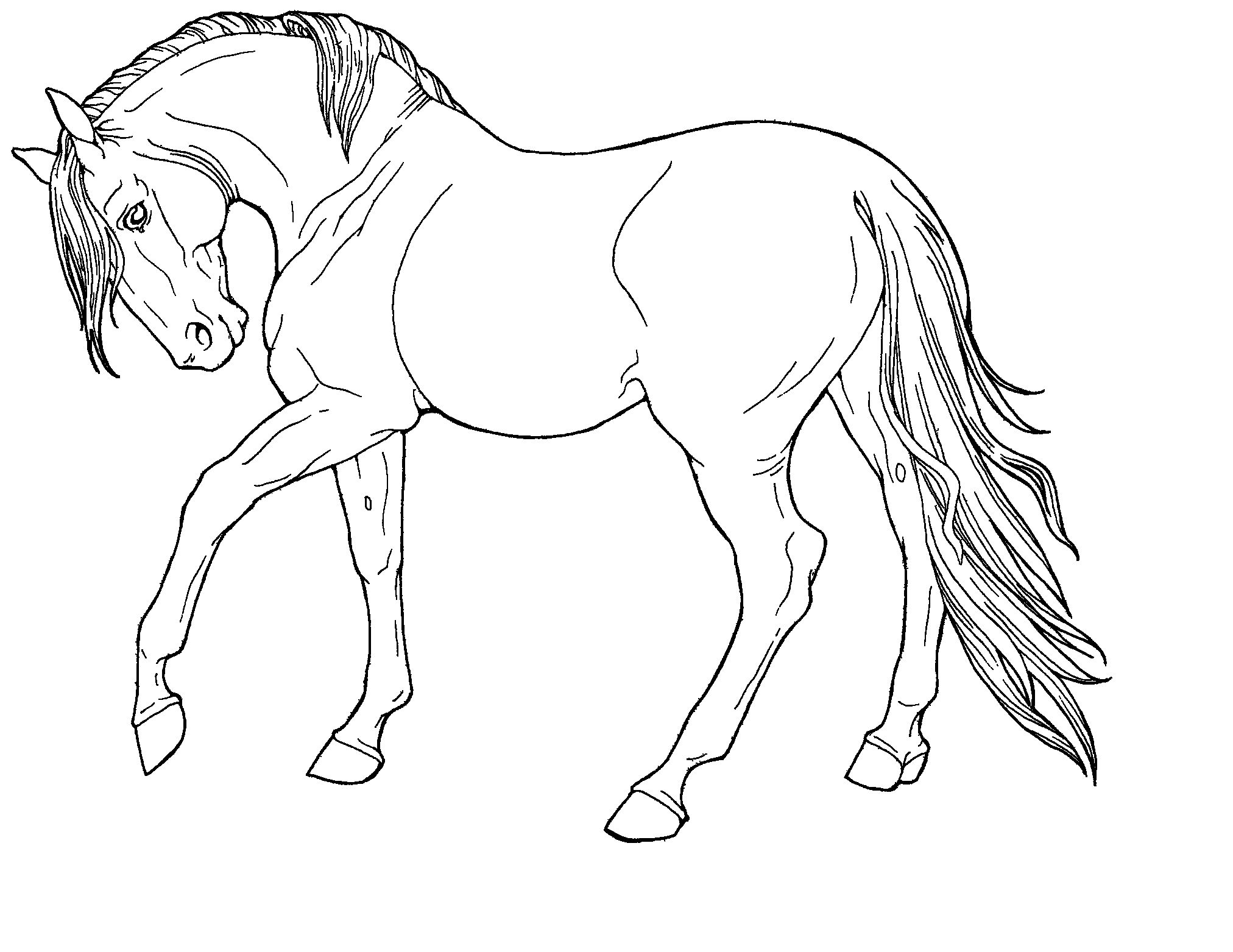 detailed horse coloring pages realistic horse coloring pages for adults coloring pages coloring detailed pages horse