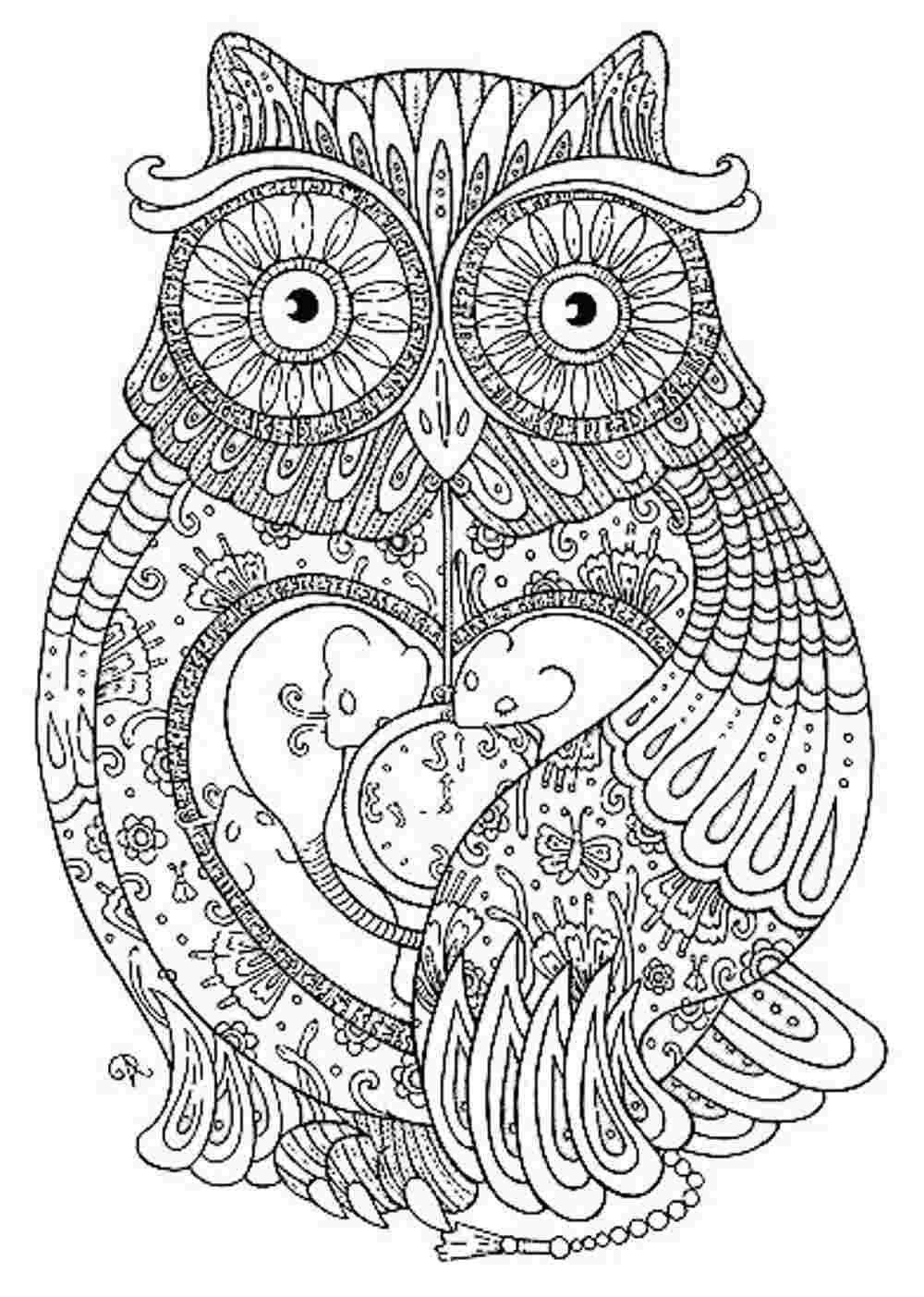 detailed owl coloring pages coloring free owl coloring pages for adults free owl coloring detailed owl pages