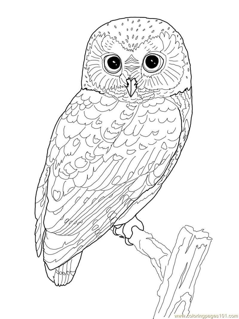 detailed owl coloring pages detailed owl coloring pages at getcoloringscom free owl coloring detailed pages