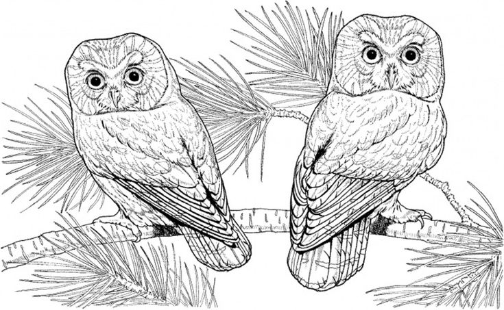 detailed owl coloring pages free printable owl coloring pages for kids detailed coloring pages owl