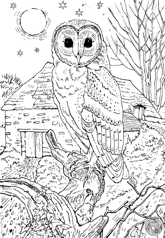 detailed owl coloring pages hard coloring pages in 2020 owl coloring pages mermaid detailed owl coloring pages