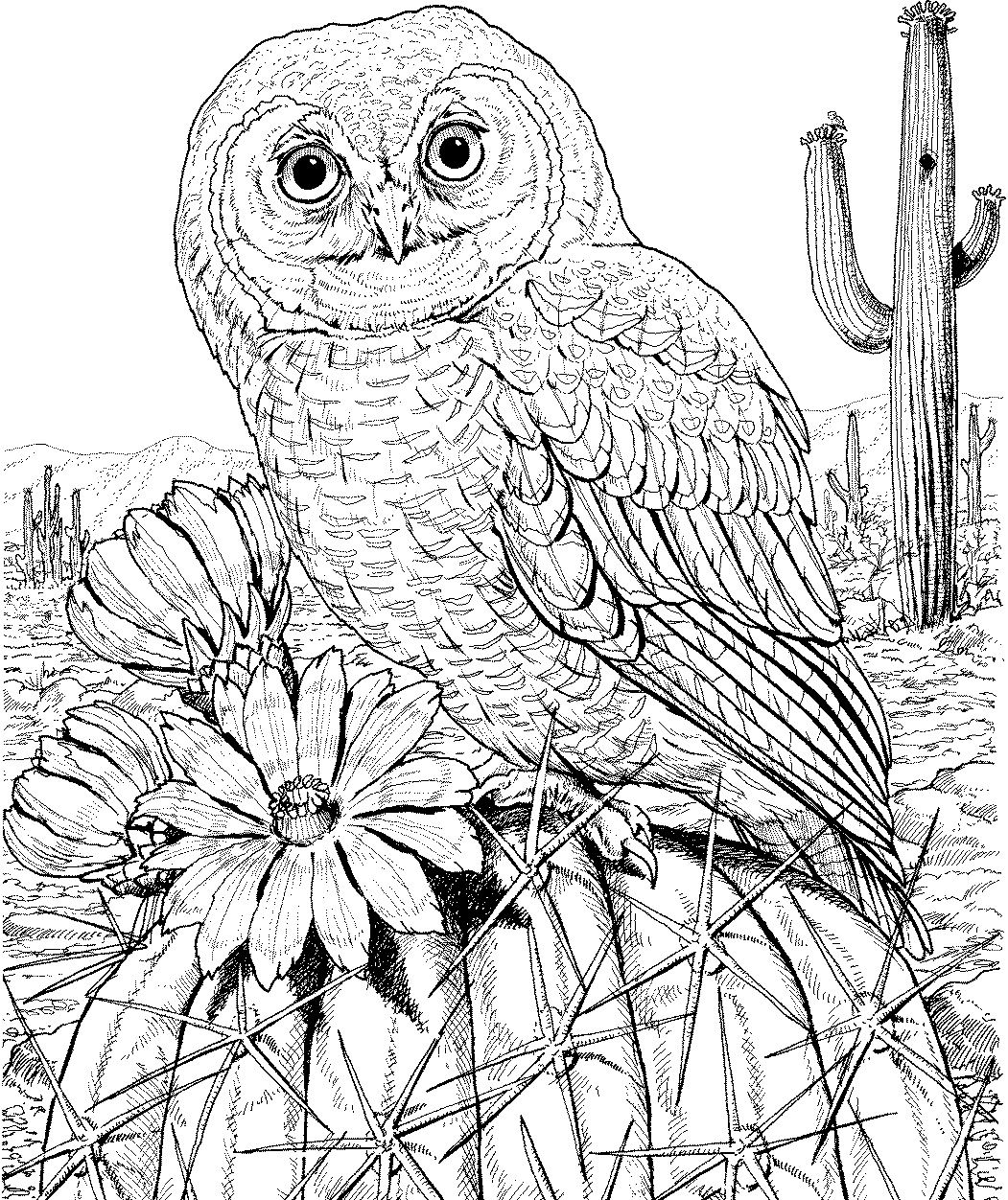 detailed owl coloring pages owl coloring pages for adults free detailed owl coloring coloring pages detailed owl