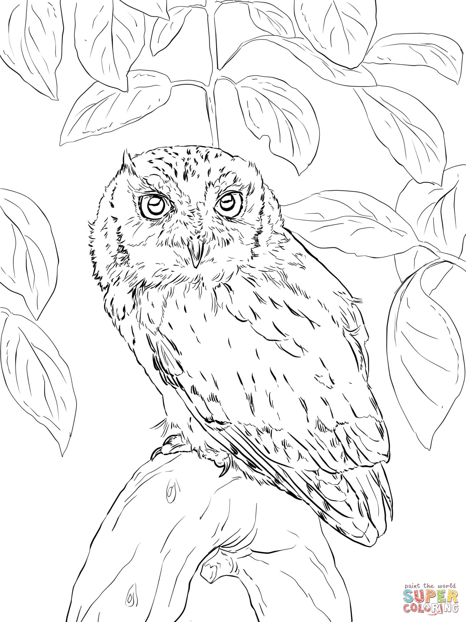 detailed owl coloring pages owl coloring pages for adults free detailed owl coloring detailed owl pages coloring