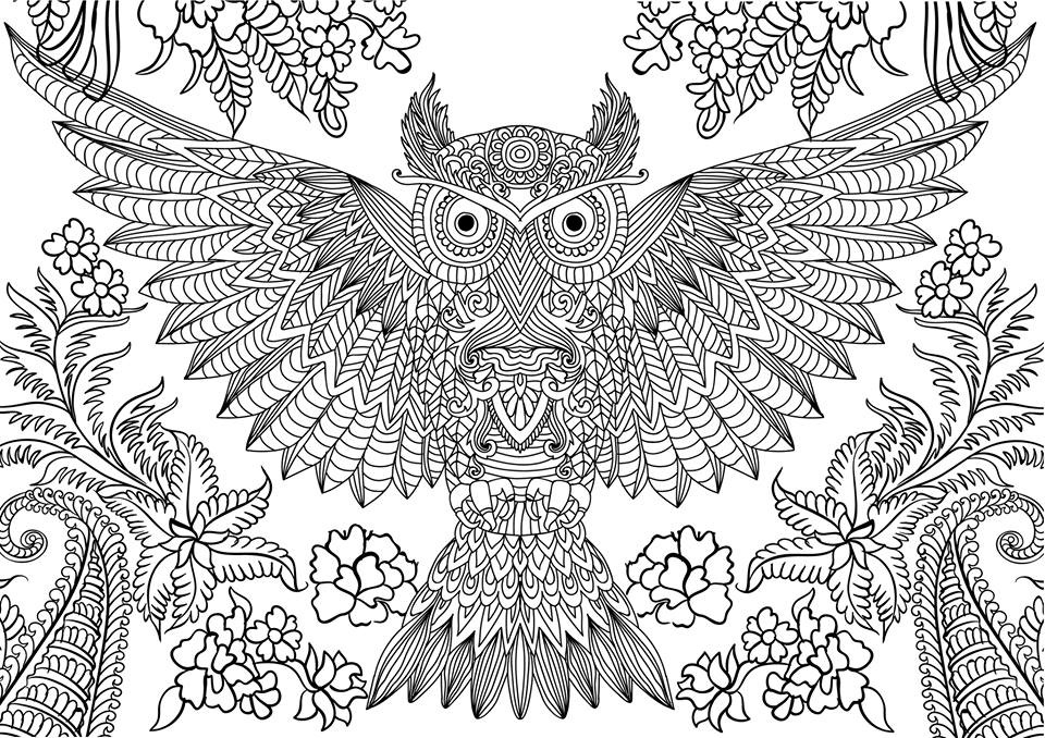 detailed owl coloring pages owl coloring pages for adults printable kids colouring detailed owl coloring pages