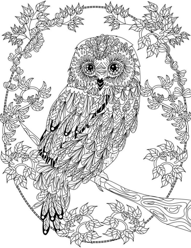 detailed owl coloring pages owl coloring pages for kids printable owl coloring page pages coloring detailed owl