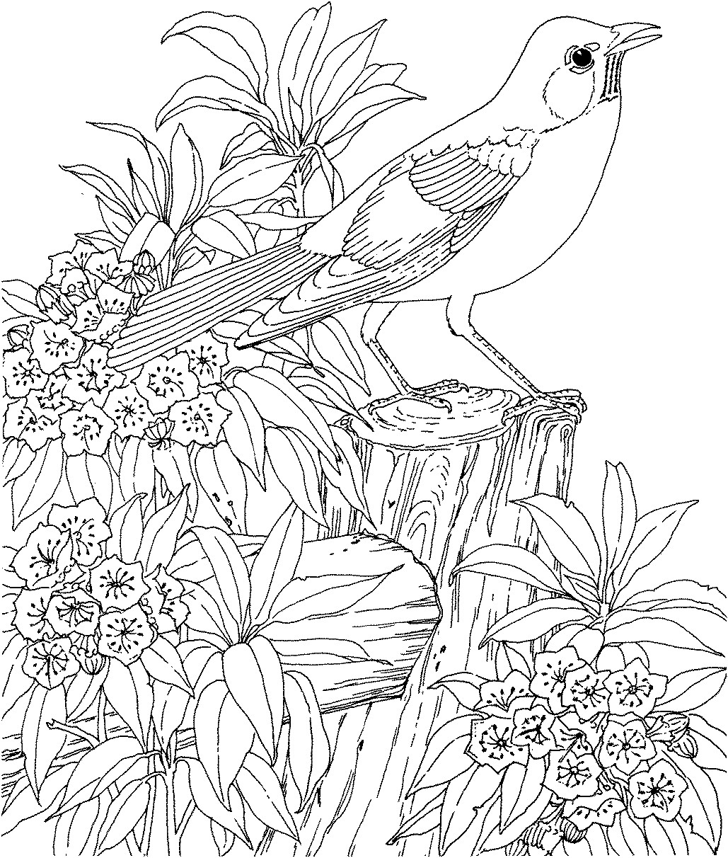 difficult coloring pages for adults difficult coloring pages for adults free printable for difficult adults pages coloring