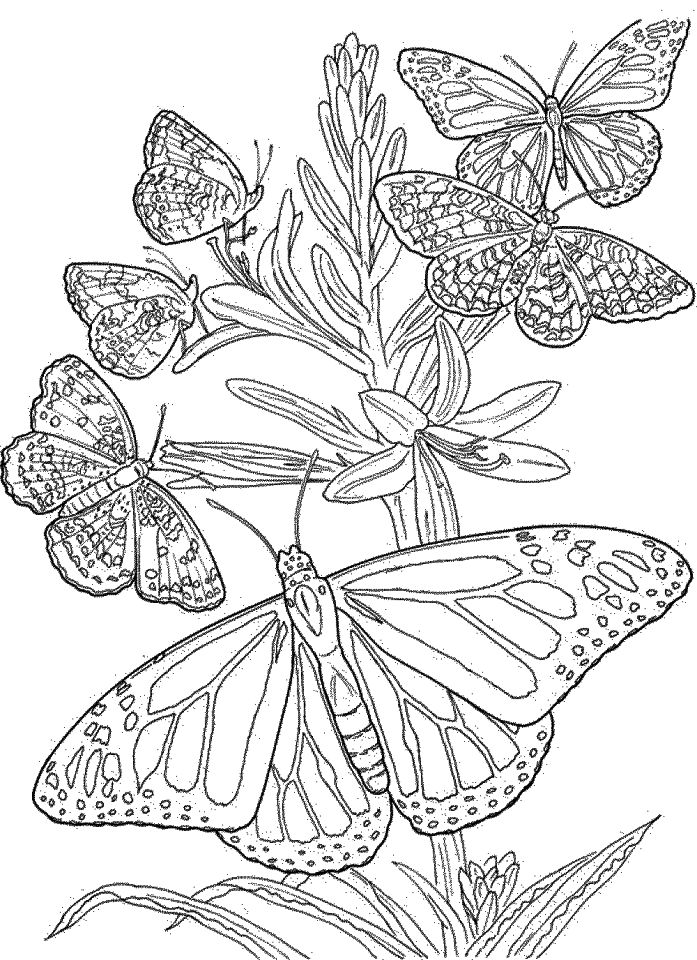 difficult coloring pages for adults extremely hard coloring pages for adults part 4 free adults for pages coloring difficult