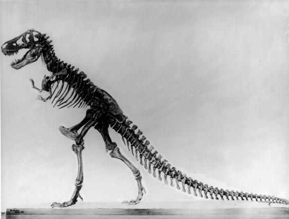 dinosaur images dino debate continues new analyses indicate they were images dinosaur