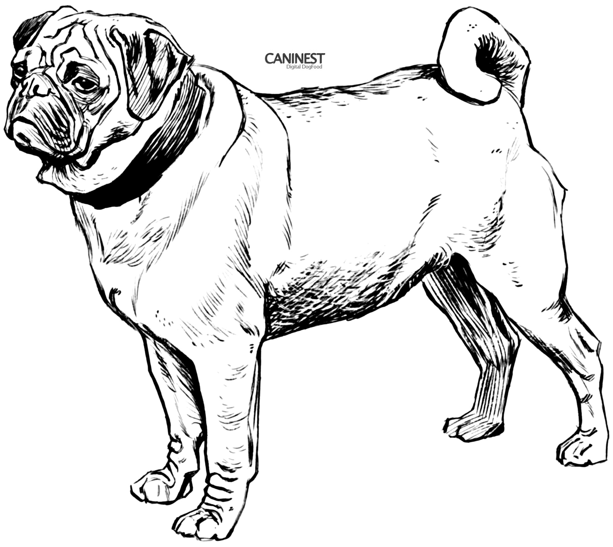 dog coloring in free coloring page dog with a bone in dog coloring