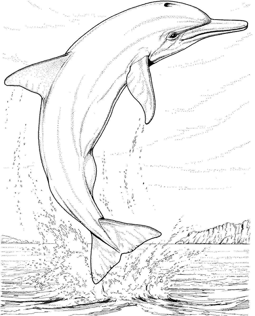 dolphins pictures to color free printable dolphin coloring pages for kids dolphins color to pictures