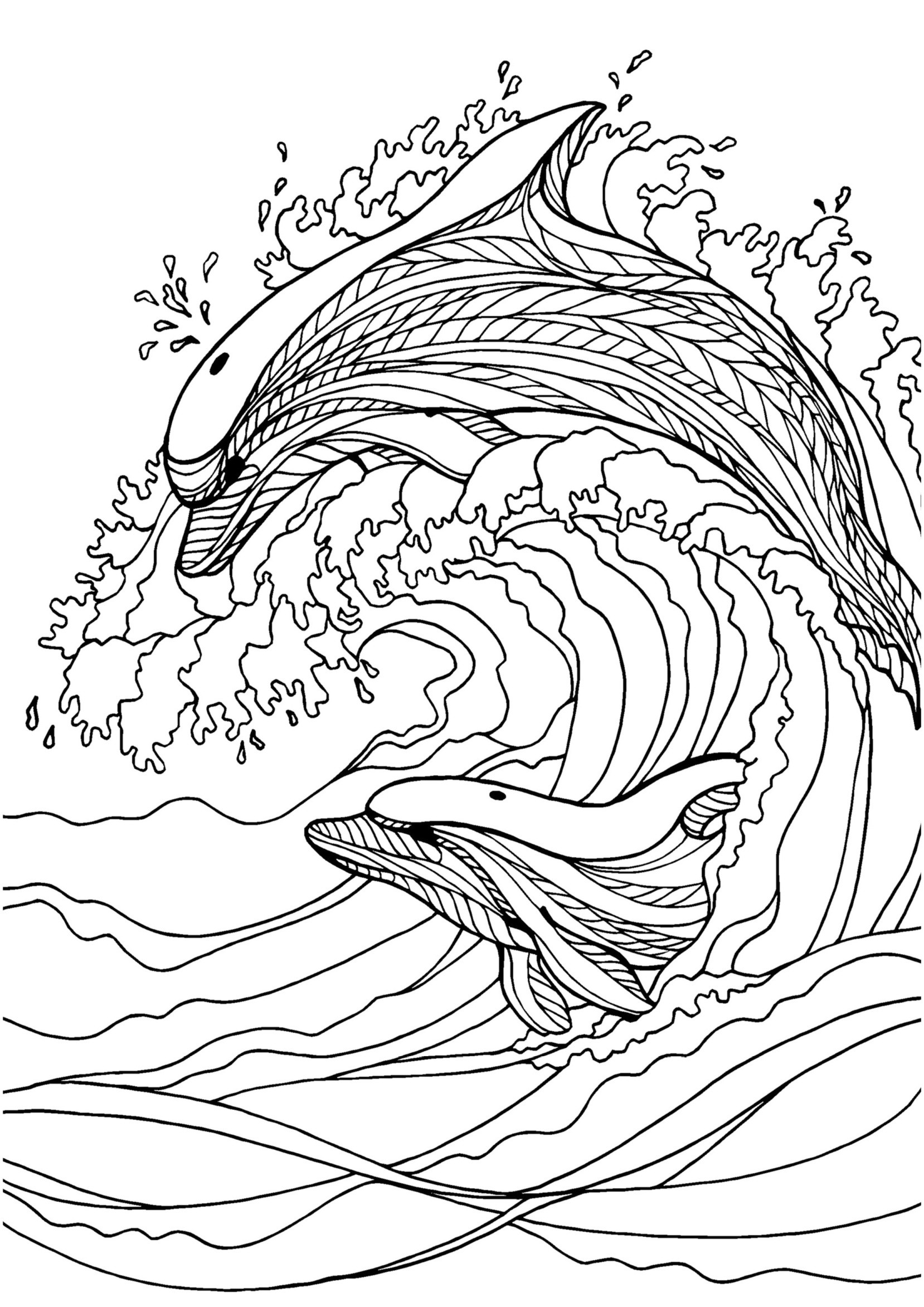 dolphins pictures to color free printable dolphin coloring pages for kids dolphins to color pictures