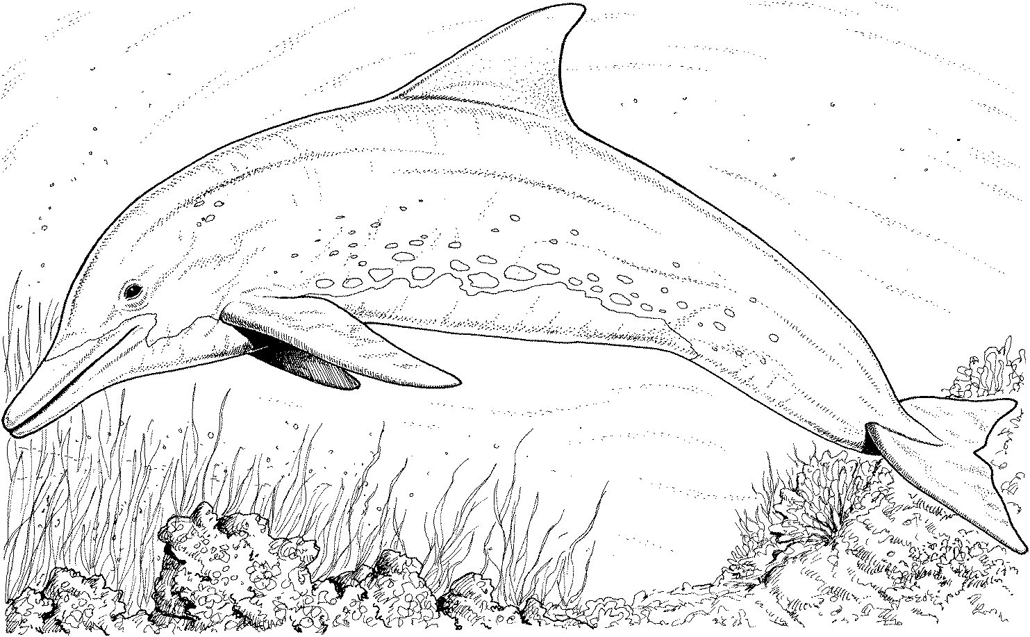 dolphins pictures to color free printable dolphin coloring pages for kids pictures dolphins color to