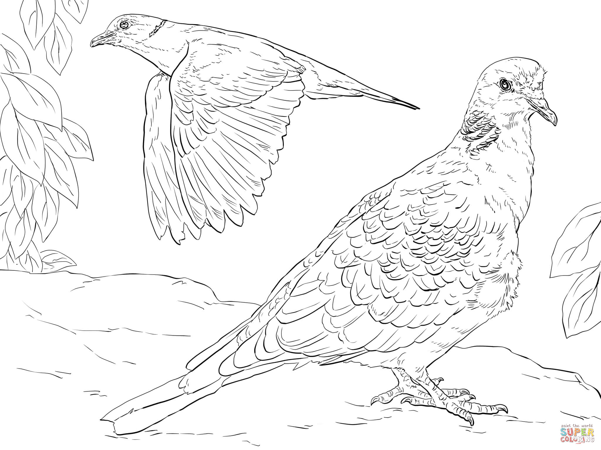 dove coloring pictures dove free coloring pages pictures dove coloring