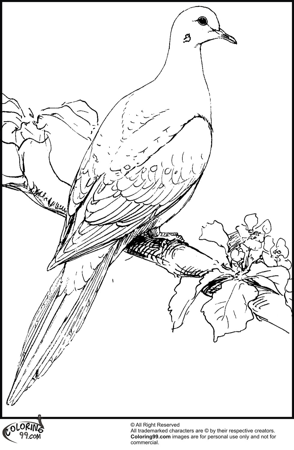 dove coloring pictures printable dove coloring page coloring pages free dove coloring pictures