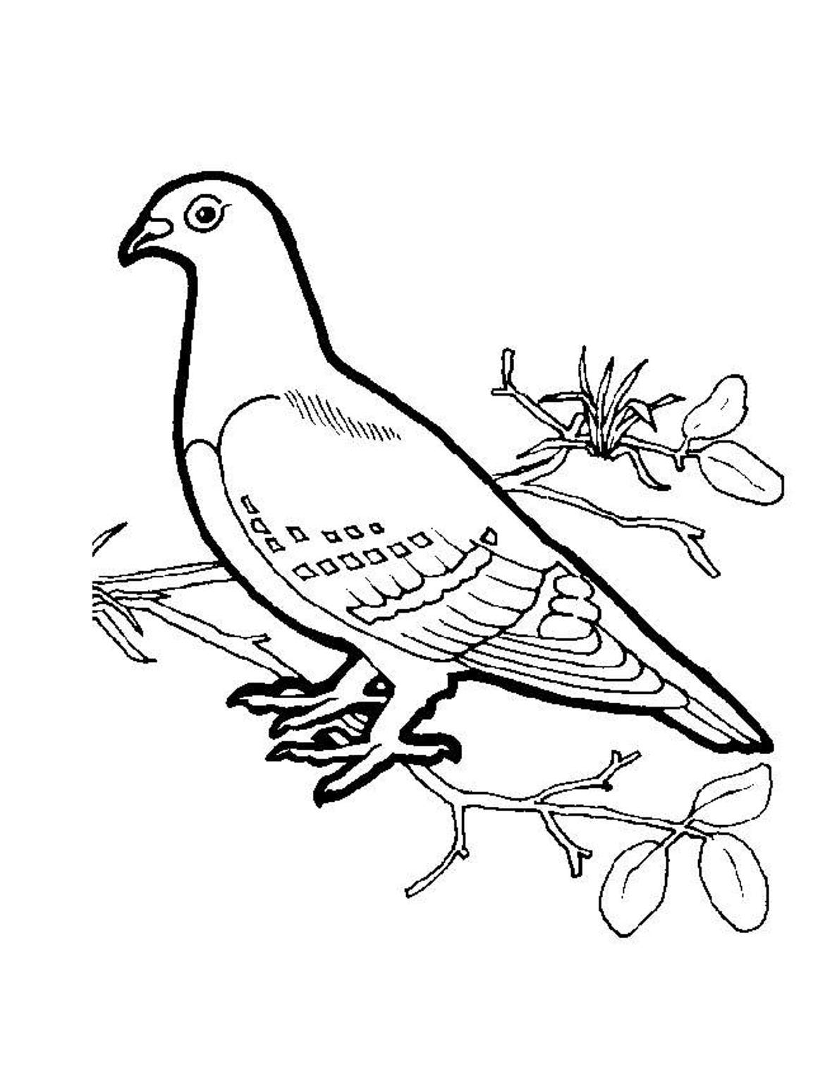 dove coloring pictures turtle doves coloring pages coloring home coloring pictures dove