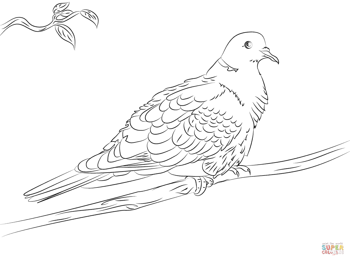 dove coloring pictures white dove coloring page coloring home pictures coloring dove