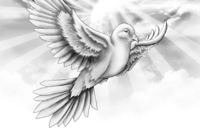dove drawing columbidae bird mourning dove drawing clip art png dove drawing
