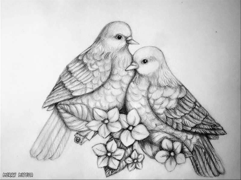 dove drawing dove drawing free download on clipartmag drawing dove
