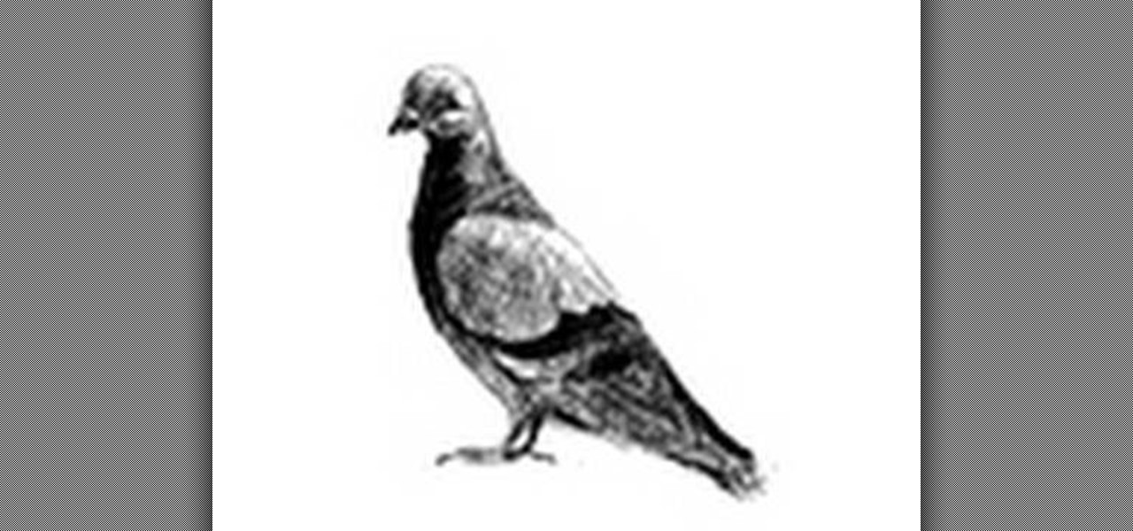 dove drawing dove from heaven christian drawings sketches tattoo dove drawing