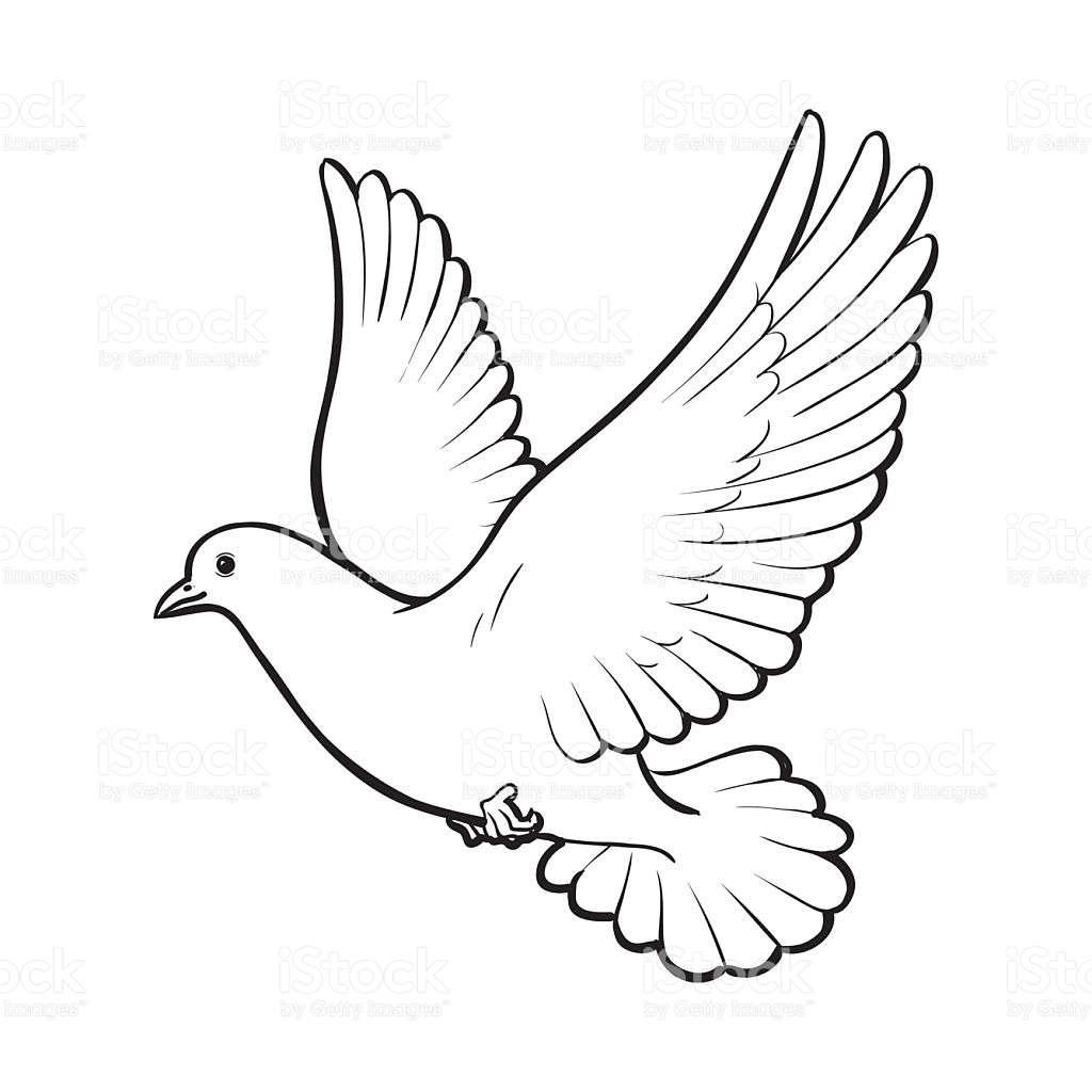 dove drawing dove tattoo by jinnra on deviantart drawing dove