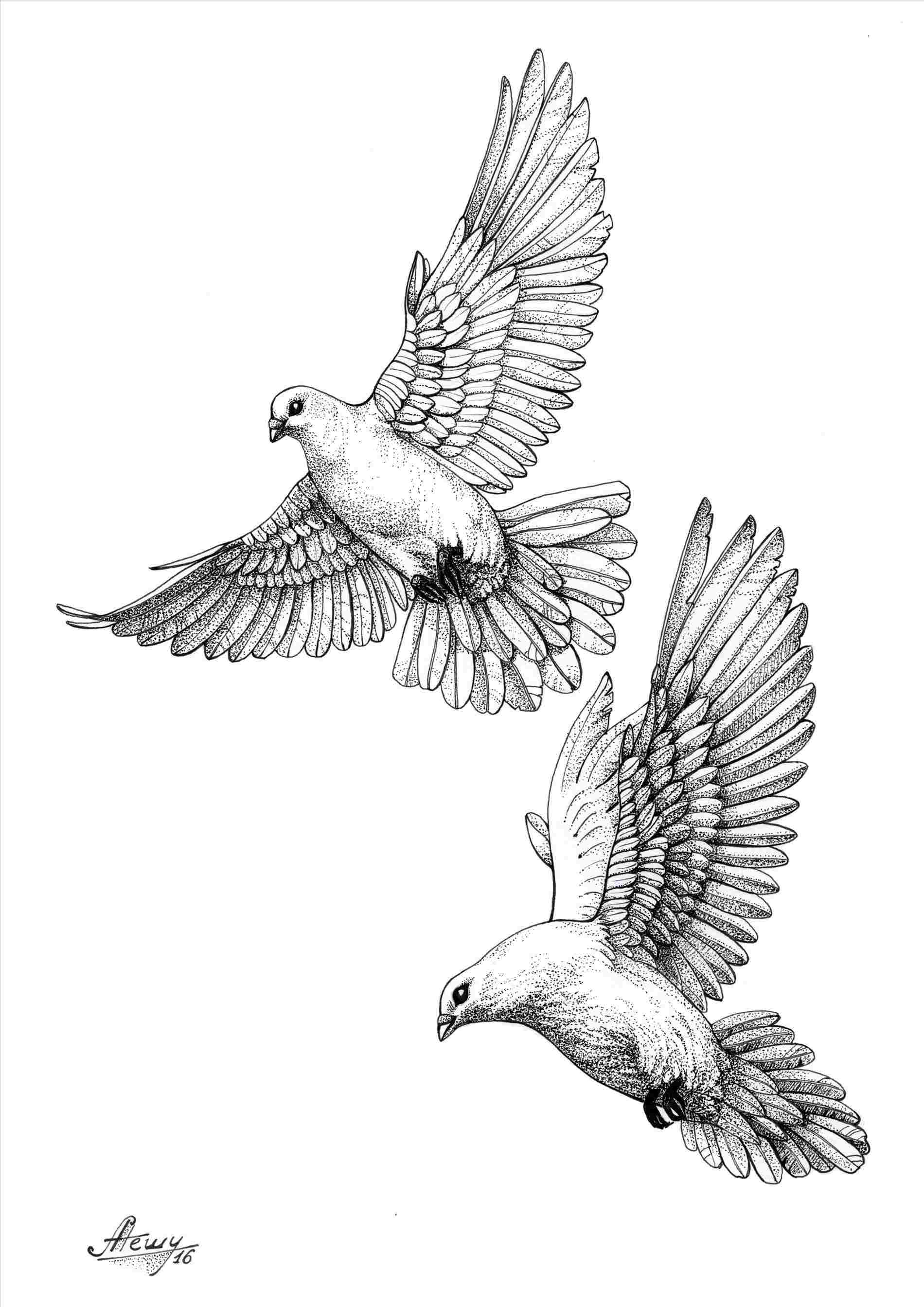 dove drawing flying books drawing free download on clipartmag dove drawing