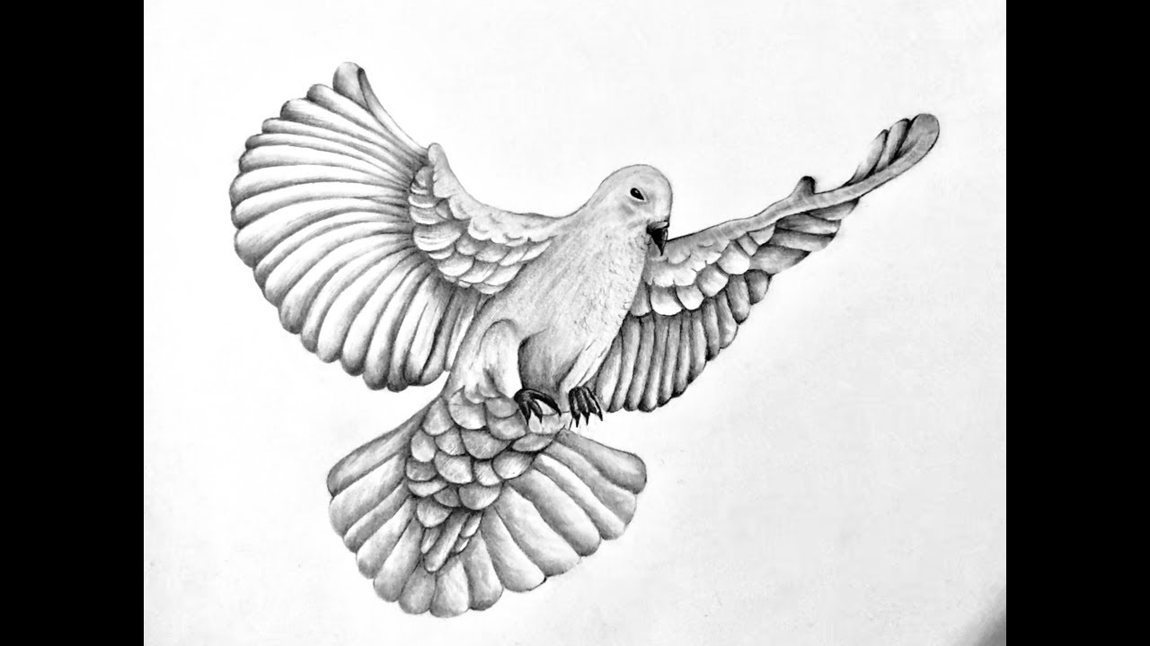 dove drawing flying doves drawing at getdrawings free download drawing dove