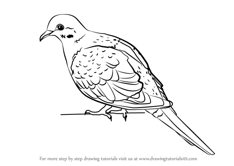 dove drawing free dove clipart images black and white photos bird dove drawing