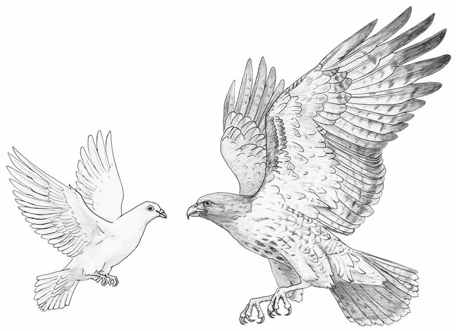 dove drawing how to draw a dove for beginners drawingforallnet drawing dove