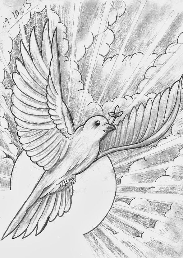 dove drawing learn how to draw a rain dove birds step by step drawing dove