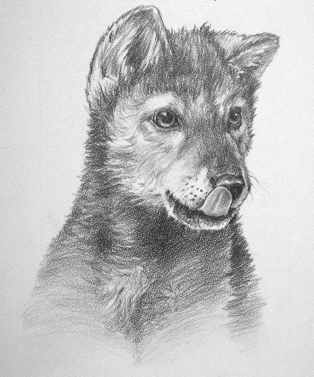draw wolf 19 amazing collection of wolf drawing design trends draw wolf