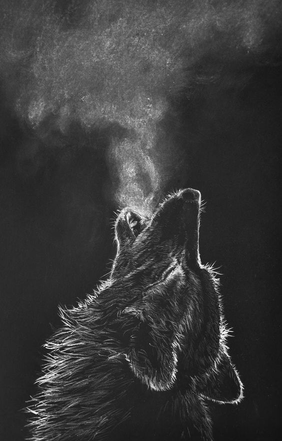 draw wolf 24 animal drawings free psd ai vector eps format wolf draw