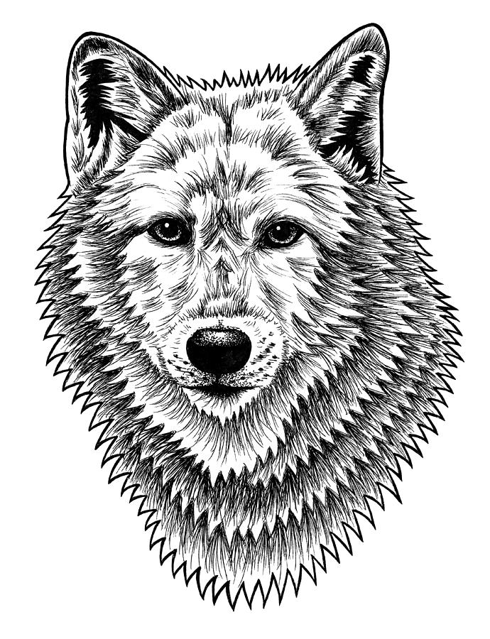 draw wolf arctic wolf drawing by sharlena wood draw wolf