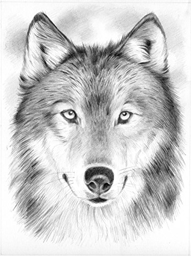 draw wolf free 20 wolf drawings in ai wolf draw