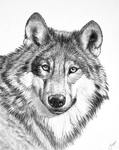 draw wolf gallery for gt wolf face drawing wolf face wolf face wolf draw