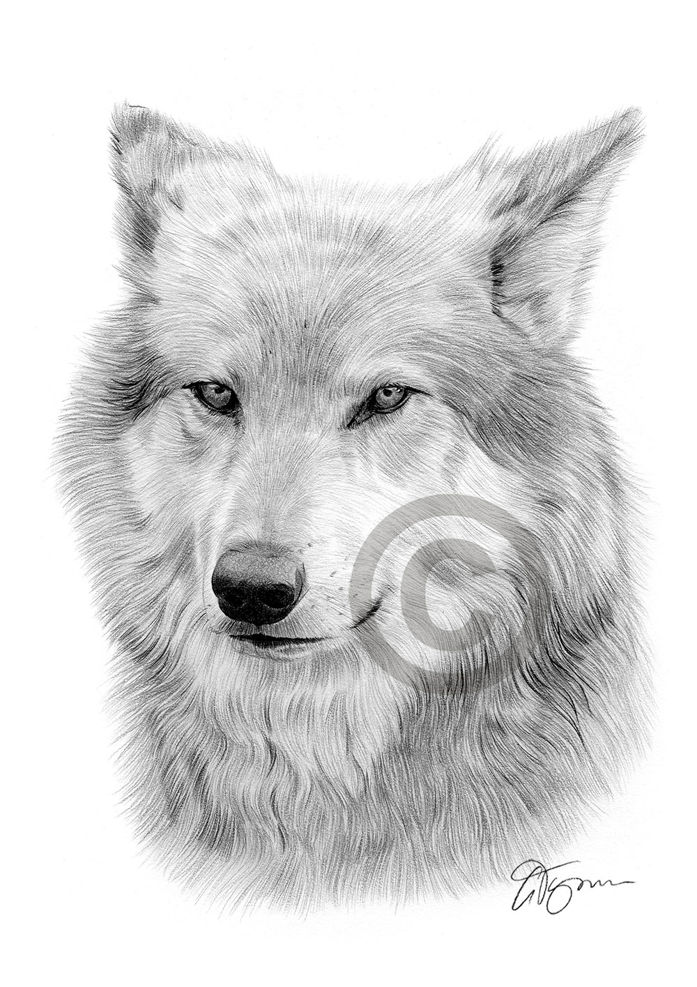 draw wolf hypnotic wolf eyes watching you drawing by russ smith wolf draw