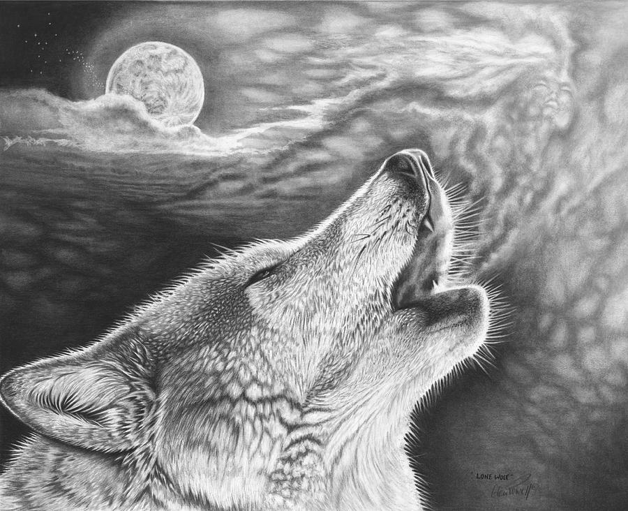 draw wolf portrait of grey wolf pencil drawing print a3 a4 sizes draw wolf