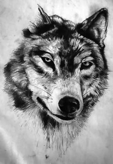 draw wolf spirit wolf drawing at paintingvalleycom explore draw wolf