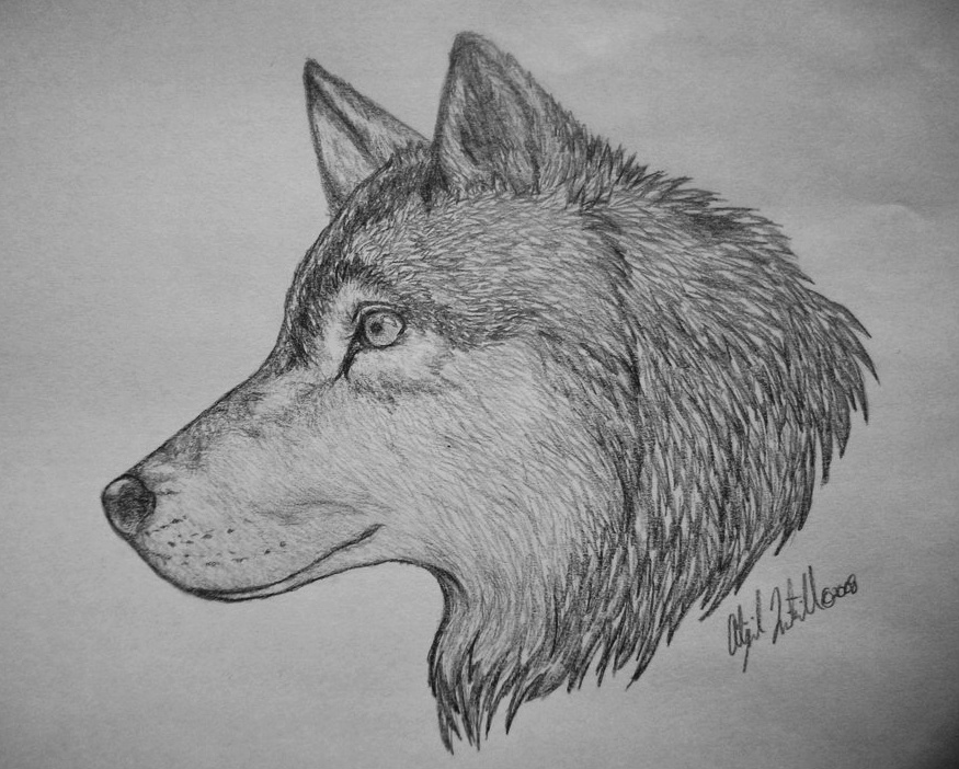 draw wolf timber wolf pen drawing by roberta ekman absoluteartscom wolf draw