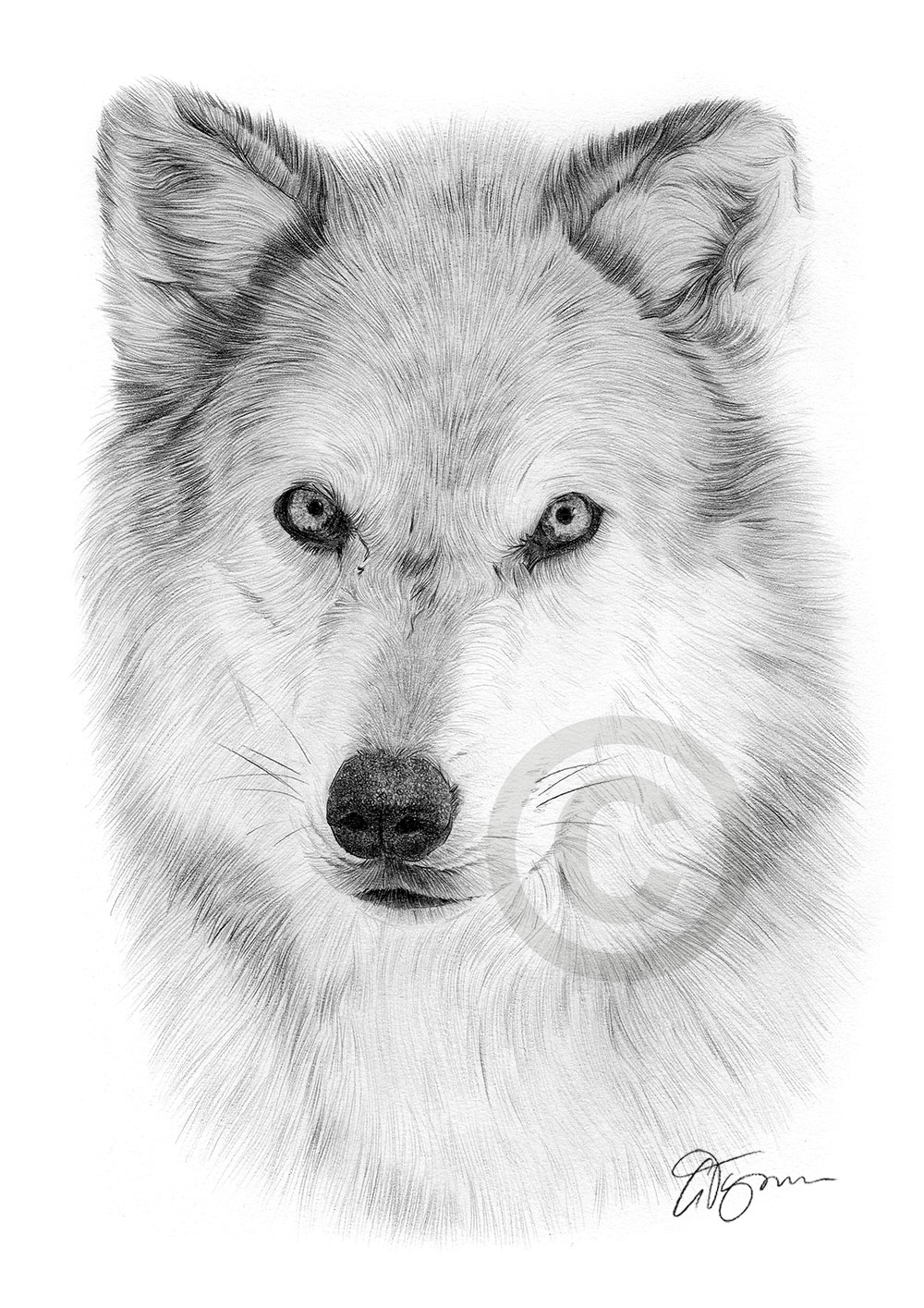 draw wolf wolf drawing by epiphany48 on deviantart draw wolf