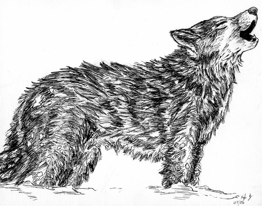 draw wolf wolf drawing by pam fries wolf draw