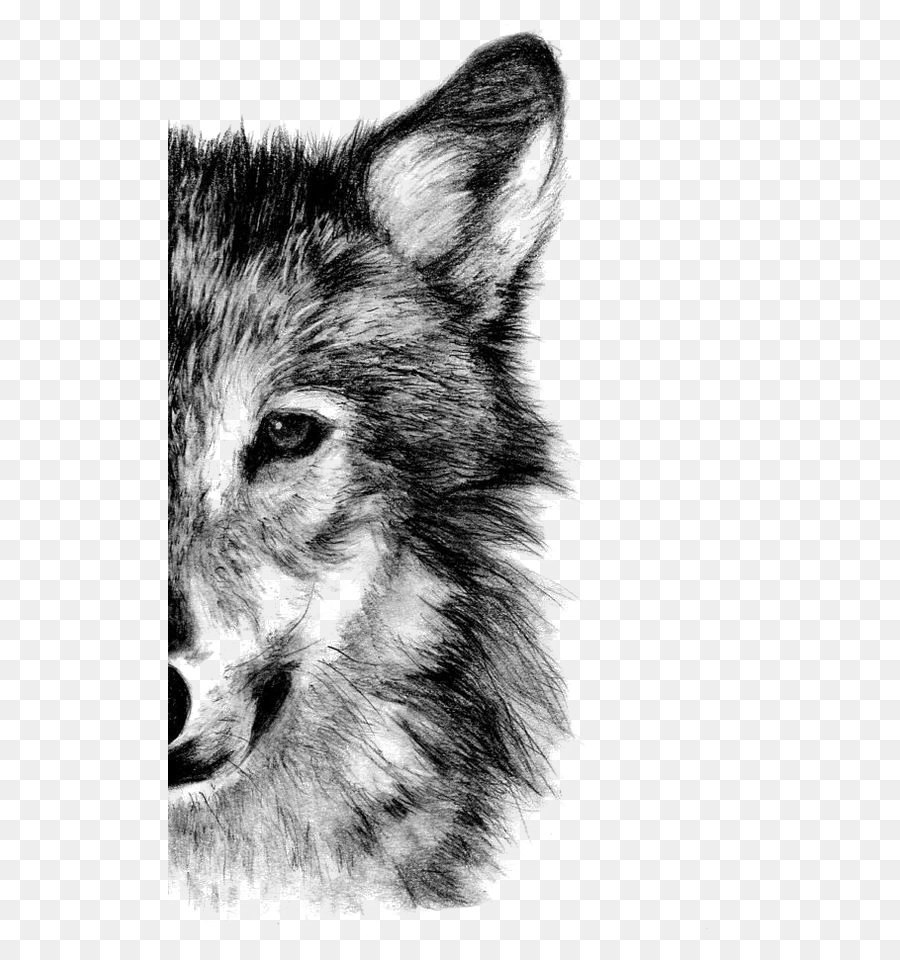 draw wolf wolf face drawing at paintingvalleycom explore draw wolf